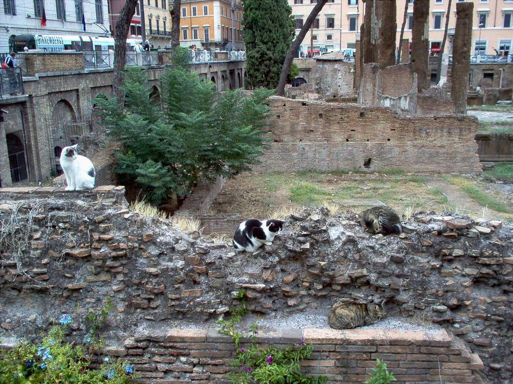 Кошки на раскопках площади