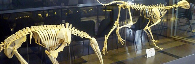 Зоологический музей в Риме