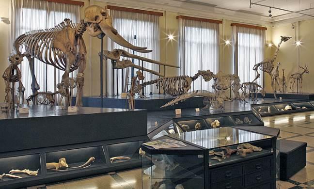 Скелеты животных